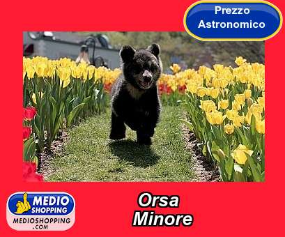 Orsa           Minore