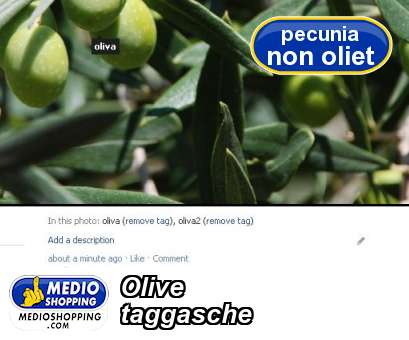 Olive taggasche