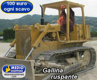 Gallina      ruspante