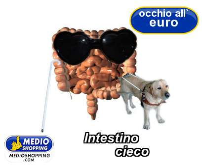 Intestino          cieco