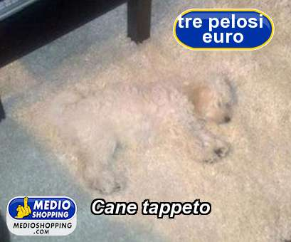 Cane tappeto